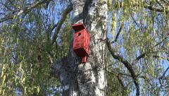 Bird house nesting-box on birch tree in spring Stock Footage