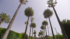 Palm Trees in Beverly Hills Los Angeles California vacation beautiful driving Stock Footage