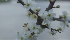 Flowering branches bush, sky Stock Footage