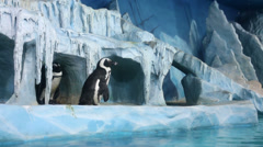 Penguins in decorative cave at oceanarium behind glass Stock Footage