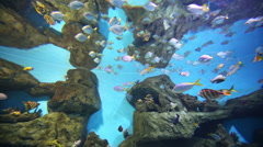 Shoal of tropical fishes in sea aquarium at oceanarium Stock Footage