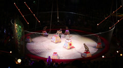 Trained cheetahs performance at arena of Circus hall Stock Footage