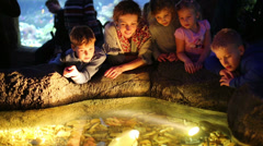 Woman and four children see after fishes in illuminated pool Stock Footage