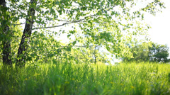 Summer park. Green grass, leaves and sunrays - stock footage
