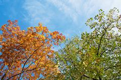 Autumn leaves against blue sky - stock photo