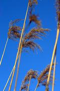 Stems in the wind Stock Photos