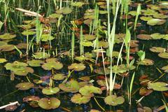 Luxuriant pond - stock photo