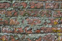 Old wall in Wassenaar. Stock Photos
