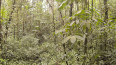 Flying through primary tropical rainforest in the Ecuadorian Amazon - stock footage