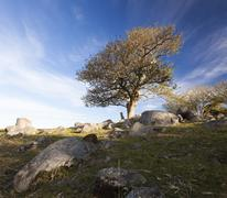 landscape with tree on rocky hill. bingie. nsw. australia. - stock photo