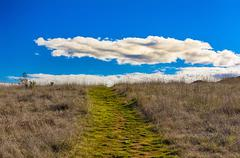 Green Path Leading to Horizon with White Puffy Clouds - stock photo