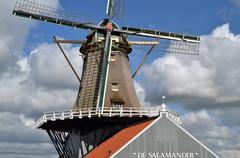 Mill The Salamander. - stock photo
