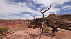 Canyonlands National Park Islands in Sky Juniper Overlook New Angle Stock Footage