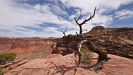 Stock Video Footage of Canyonlands National Park Islands in Sky Juniper Overlook New Angle