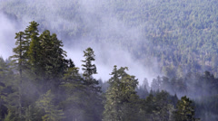 Mist Over Redwood National Park - stock footage