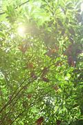 Morning sun shines through fresh leaves Stock Photos