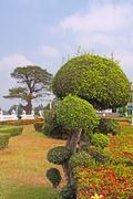trimmed bush in a formal garden - stock photo