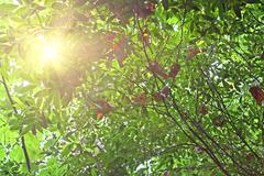 morning sun shines through fresh leaves - stock photo