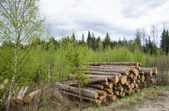 logpile at spring - stock photo
