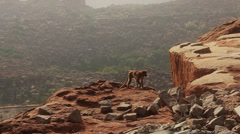 A monkey walks above a cliff, in front of rivers, hills and boulders. Stock Footage