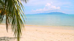 Tropical Paradise at Samui with palm  tree on the beach Stock Footage