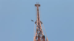 Bird fling near the crane at Harbor Stock Footage