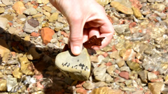Leeches wiggling and clinging to river stone. Stock Footage