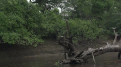 080 Pantanal, boating on the river, birds on tree in water Stock Footage