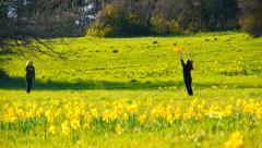 Slow Motion Frisbee, Field of Daffodils Stock Footage