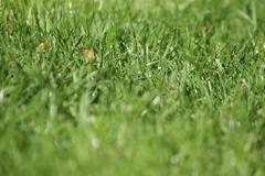 Grass Close up Stock Photos