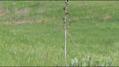 Yellow wagtail on the plant Stock Footage