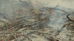 Fire on a Farm During Burning Season Locked Shot Closer Stock Footage