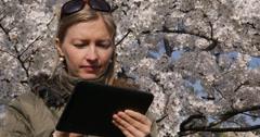 UHD 4K Attractive woman digital tablet park flower tree springtime blossom day Stock Footage