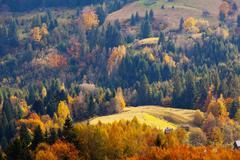 Stock Photo of autumn