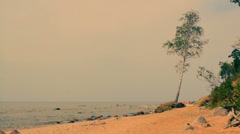 The beach with stones in summer, trees near the sea Stock Footage