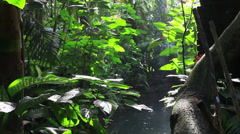 Jungle tropical forest rainforest garden green leaves trees water pond lake sun Stock Footage