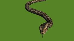 Snake&jungle carpet python slide attack,sliding decorative non venomous. Stock Footage