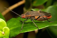 Shield bug Stock Photos