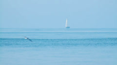 White yacht in the sea in summer in a distance, calm, birds flying Stock Footage