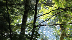 Summer trees with sparkling lake. Stock Footage