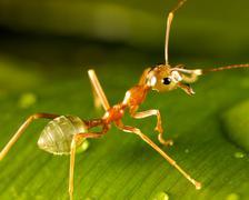 green ant - stock photo