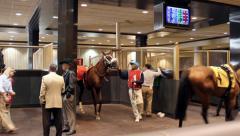 Horse Paddock Stock Footage
