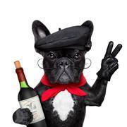 french dog - stock photo