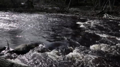 River stream in spring Stock Footage