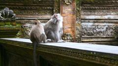 Monkey forest Ubud, Bali, Indonesia - stock footage
