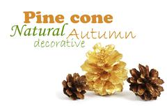two pine cones and one golden cone over white background with sh - stock illustration