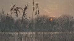 Autumn Pond Plume Reeds Twilight Afterglow Sunset - 29,97FPS NTSC - stock footage