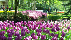 LISSE, THE NETHERLANDS - APRIL 22 2014: Keukenhof is the Garden of Europe. - stock footage