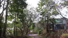 A narrow way along the green trees Stock Footage