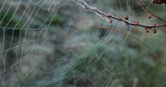 Spiderweb closeup in the wild Stock Footage